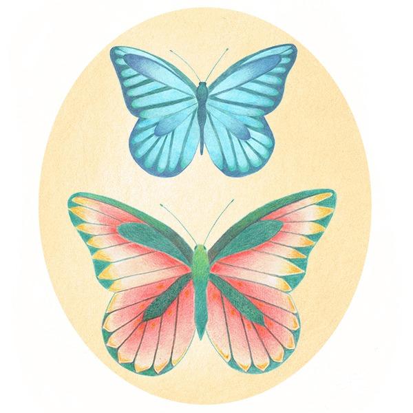 vlinders tekening potlood