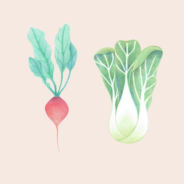 groenten - illustratie Haske Kroes - Sommers