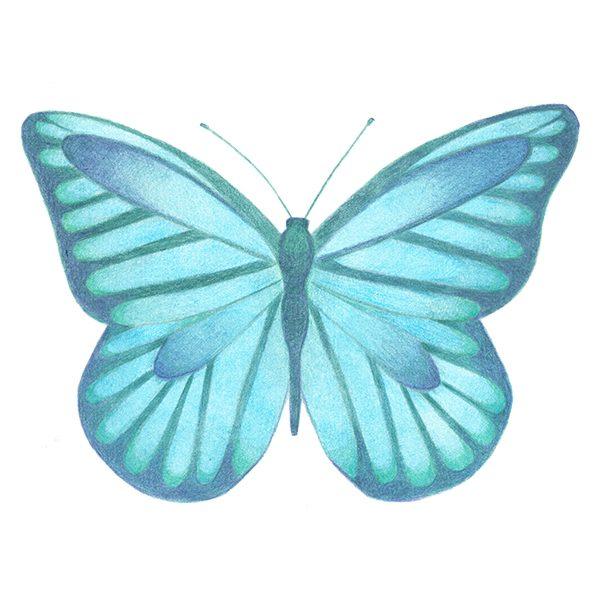 Illustrator Amsterdam | Haske Kroes-Sommers | blauwe vlinder
