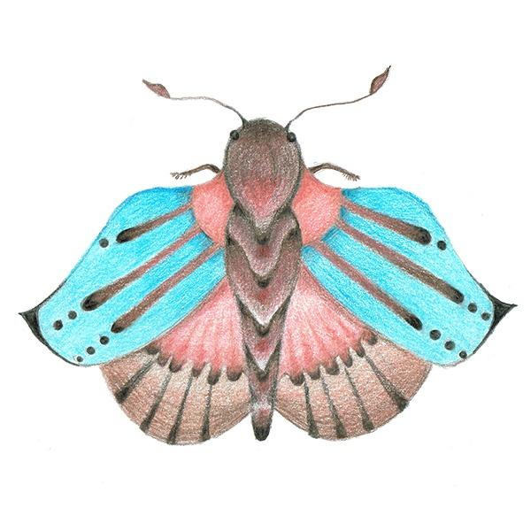 vlinder roze blauw - poltloodtekening